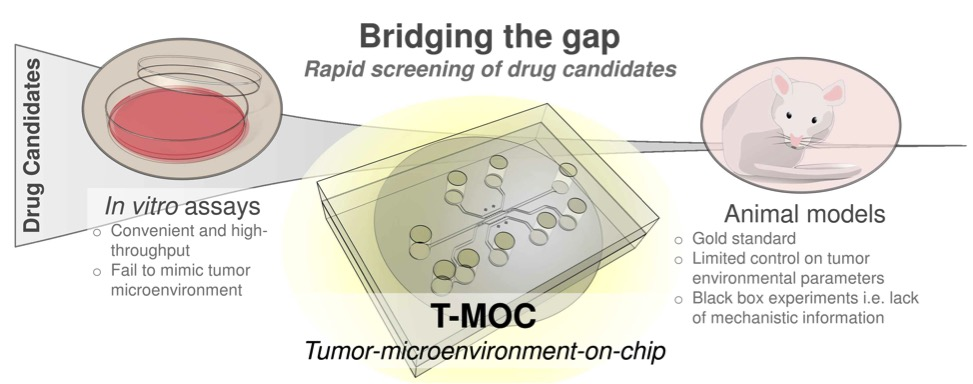 anti cancer drug screening in vitro View mohan kumar phd's profile on  research focusing on anti-cancer drug discovery  high throughput screening and identification of anti-cancer agents 2.